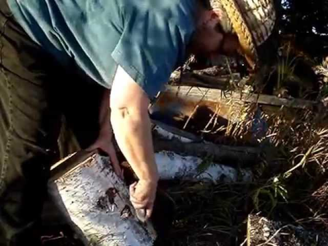 Harvesting Birch Bark, part 4