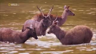 Дикая природа Таиланда. Настоящая дикая природа (документальный фильм) [HD]