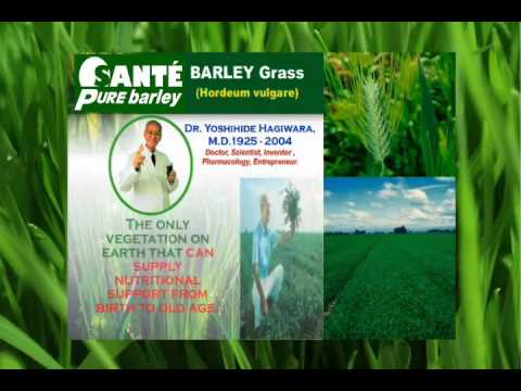 Sante Barley Benefits - Sante Barley Business Reviews Part 4