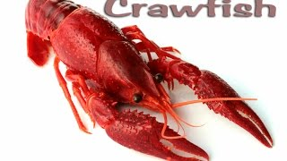 Crawfish!!! Catching, Cooking, Cleaning and EATING!!! Deer Meat For Dinner