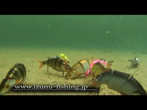 IZUMI shad live bait