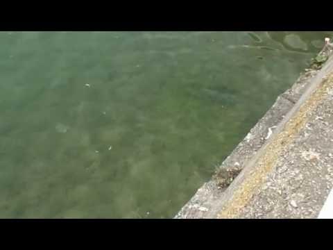 Змеи в озере Пятигорска