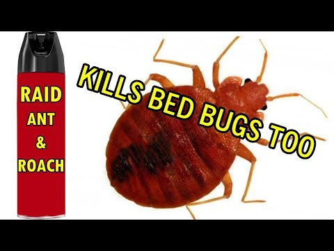 Bed Bug Treatment Country Max