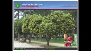 Parque Grande Labordeta. 145 especies ornamentales.