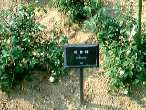 東山動植物園3