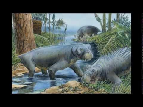 Historia de la Tierra P2y3 - El Paleozoico.wmv