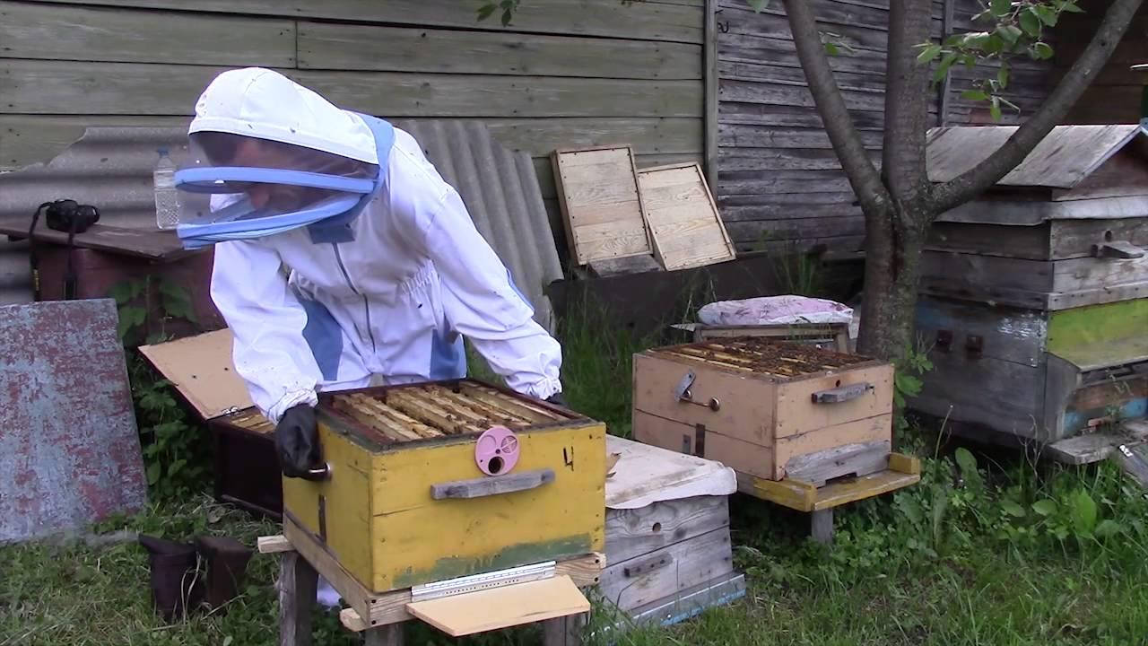 Как в августе сделать отводок пчел 429