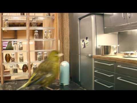 Putns pārnāk mājās