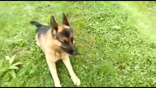 Testimonial from a dog owner | Solid K9 Training Dog Training