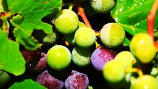 Richie Havens - Follow