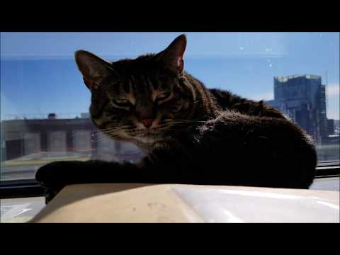 Feline Observational  -  Tacy Cat Grooms on the Windowsill