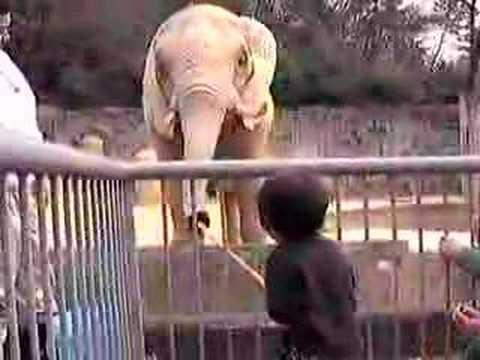 象に餌付け