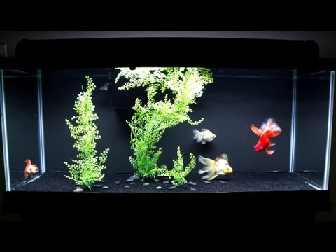 Goldfish tank new decor youtube for Aquarium decoration for goldfish