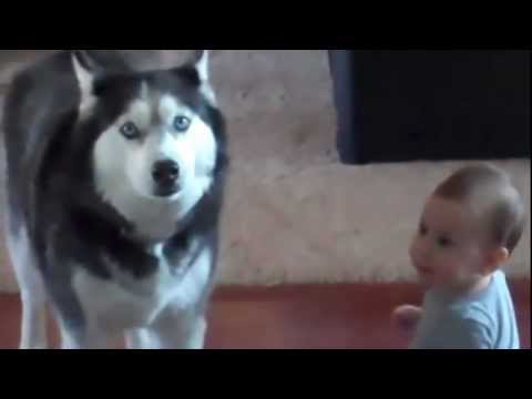 Dog and Baby Talk to Eachother