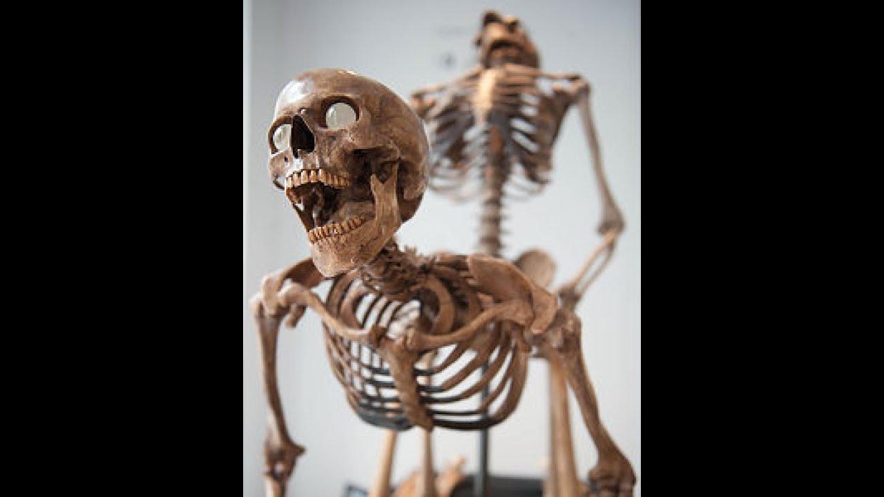 Скелеты занимается сексом 2 фотография