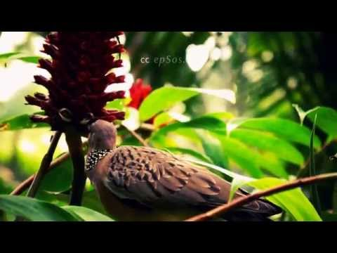 Cute Asian Dove Couple Eating Luch in Tree