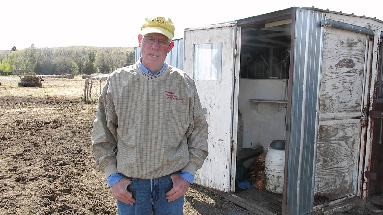 Breeding Box For Cattle Cattle Breeding in Nebraska