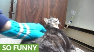 Cat makes ridiculous face when back is scratched