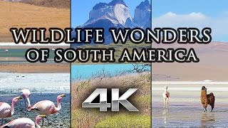 [HD] Wildlife Wonders of South America | Bolivia & Chile | 1 Hour Nature Relaxation™ Documentary