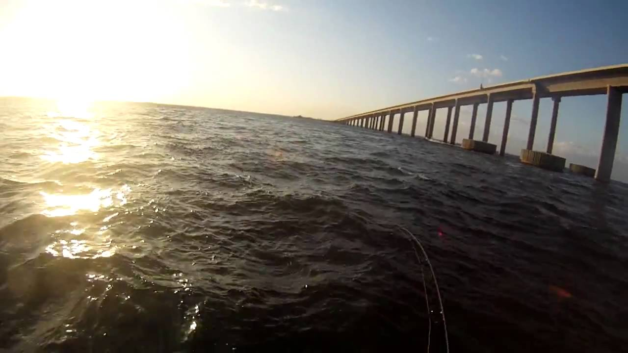Shark eats tarpon tampa sunshine skyway capt clay for Skyway bridge fishing report