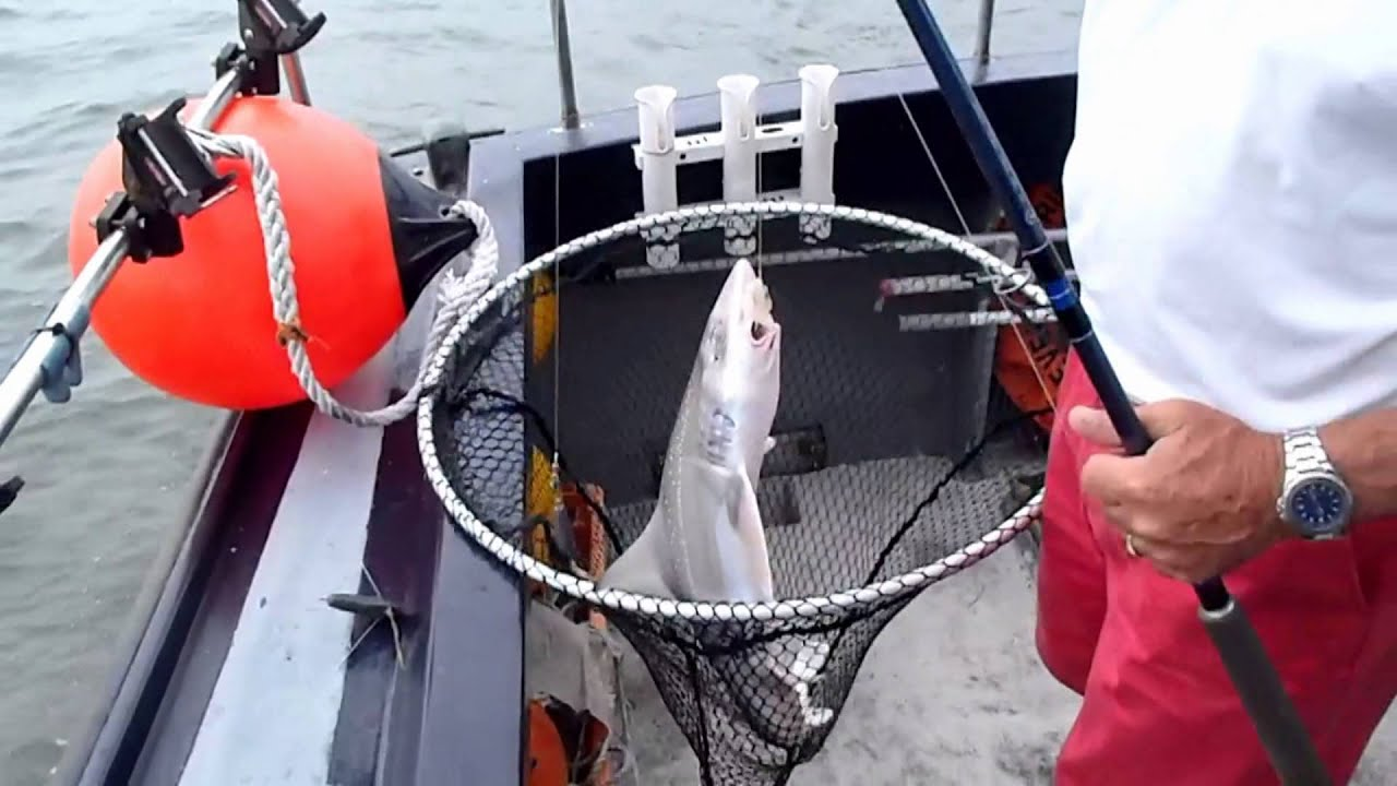 Boat fishing summer fishing with cleveland princess for Fishing charters cleveland ohio