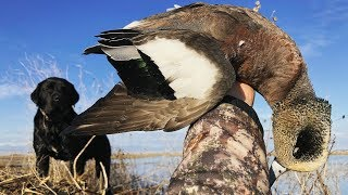 STUD BIRDS! Public Refuge Duck Hunt