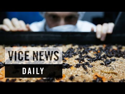 VICE News Daily: How Insects Could Fight Hunger in Developing Countries