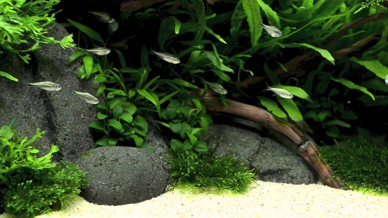 ADA Style Aquascape 5 Months old - YouTube