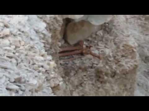 На окраине Харачоя при строительстве дороги обнаружили старое кладбище с останками
