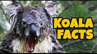 15 Facts About Koalas Nobody Knows About