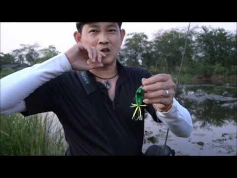 รีวิว เหยื่อ TT Lure : TF Frog by Siam Spoon