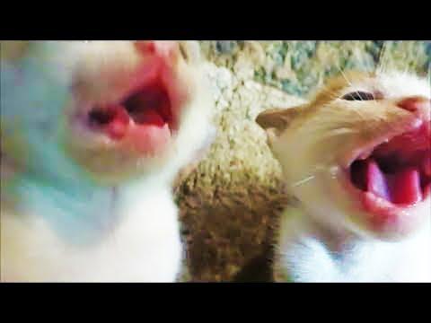 Befriending angry kittens !