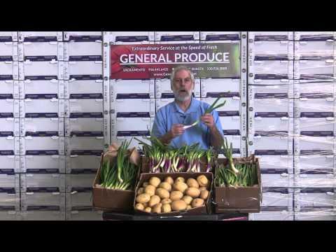 Produce Beat:  Spring Garlic & Onions, Bintje Potatoes