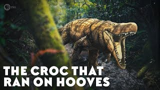 The Croc That Ran on Hooves