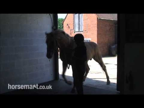 How semen is collected from a stallion