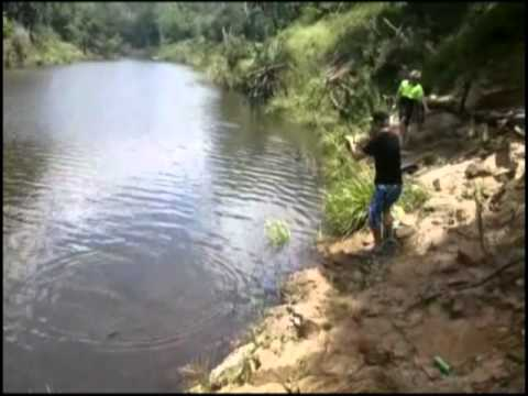 Catching Tilapia Lungfish Bass Yellowbelly