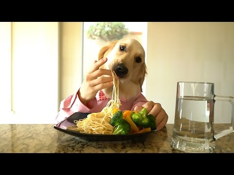 Perro cocinero come pasta con vegetales