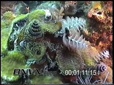 5/31/2002 Dry Tortugas, FL scuba diving footage