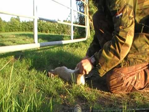 Air Rifle Hunting. Rabbit Hunt. MAY 2010.