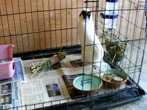 Pet Rabbit Youtube