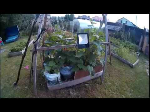 Выращивание огурцов в мешках на улице//