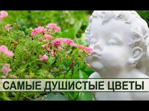 Душистые садовые цветы: как подобрать самые ароматные растения для сада или дачи. Fragrant flowers