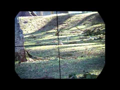 Gamo cfx .22 ou 5.5mm(sniper shot style)