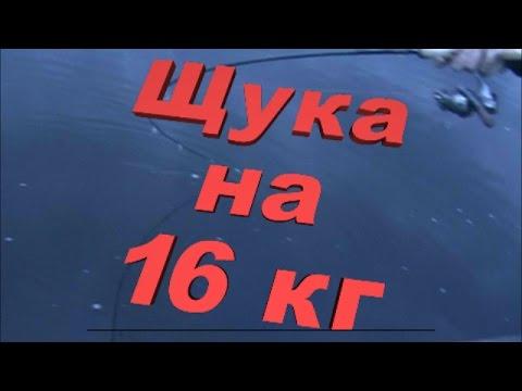 РЫБАЛКА ЩУКА МОНСТР, щука на 16 кг