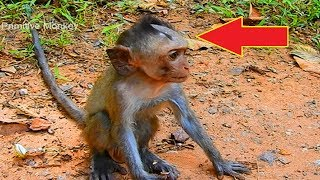 Poor Adorable Baby Monkey, Why His Head Like This!
