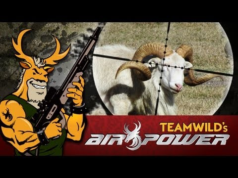 Extreme Airgun Hunting - Texas Dall Sheep with the Benjamin Rogue .357