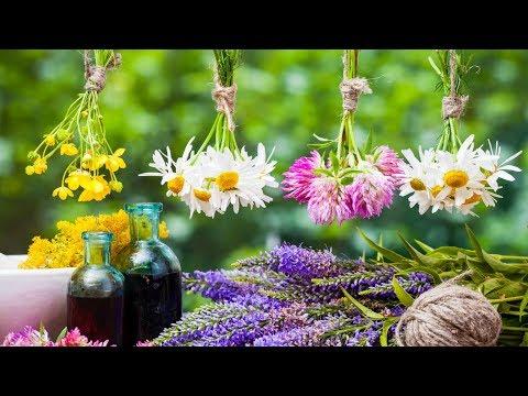0 - Золототисячник — лікувальні властивості і протипоказання трави для жінок ?