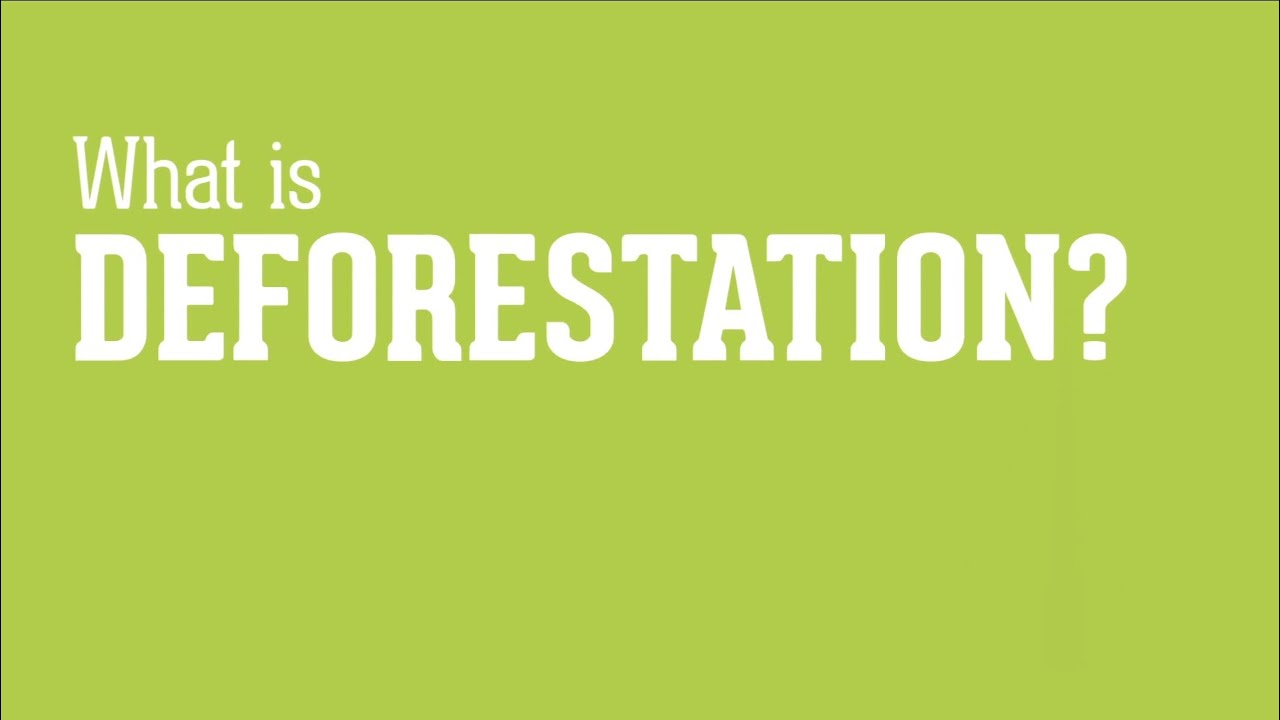 is deforestation out of control essay May 2007 essays richard flanagan out of control tasmania, styx valley  in  logging coupes around tasmania, exotic rainforest trees such as myrtle,.