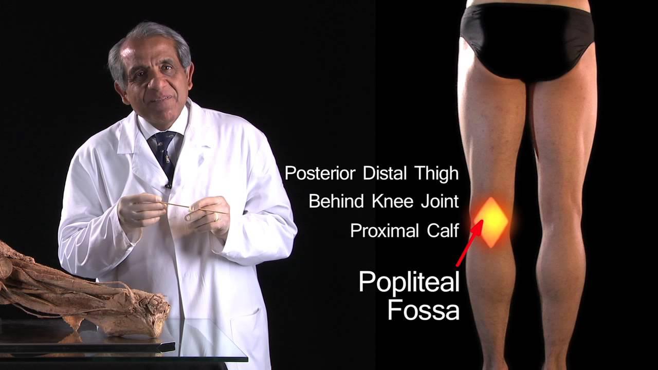 Anatomy of Popliteal Fossa Popliteal Fossa Anatomy