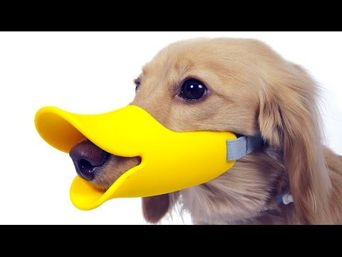 5 Amazing Pet Gadgets You MUST HAVE! ▶6